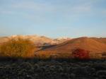 Die leuchtende, sonnige, argentinische Steppe